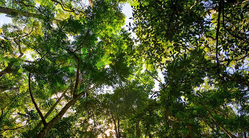 Manejo sustentável mantém florestas nativas em pé e gera renda