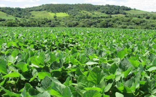 Em Mato Grosso do Sul, plantio da soja chega a 167,6 mil hectares