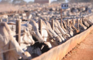 Preço do boi gordo atinge R$ 227,40 por arroba, diz Cepea