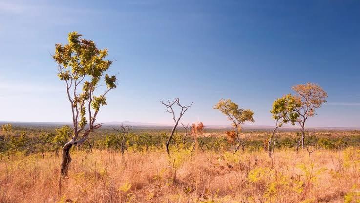 Através da integração Lavoura-Pecuária-Floresta Projeto recupera 93 mil hectares de pastagens