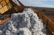 Setor do algodão terá margens próximas da média histórica, diz Itaú BBA