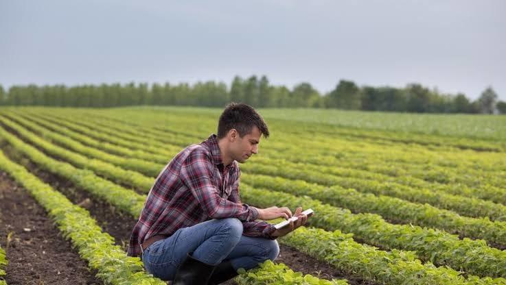 Produtor poderá obter classificação do solo pelo celular