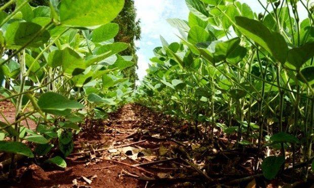 Com 49,5% da safra de soja plantada em MS, atraso coloca entidades em alerta