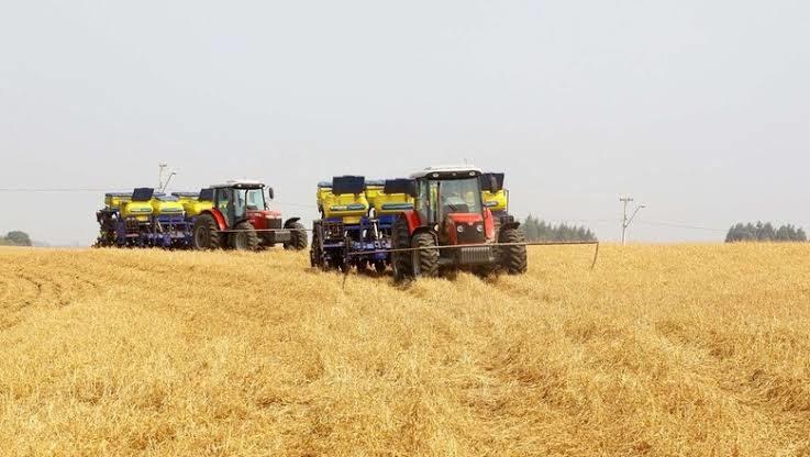 Plantio da soja atinge 87% da área, em linha com média de 5 anos, diz AgRural