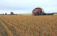 Datagro estima área plantada recorde de soja na América do Sul em 2019/20