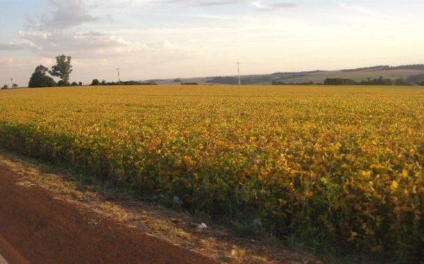 MS deve colher mais de dez milhões de toneladas de soja