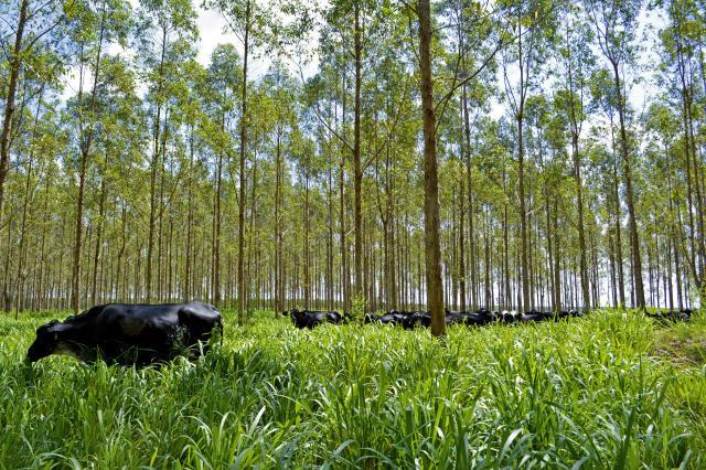 Semana Verde de Berlim debate experiência brasileira de produção sustentável de alimentos