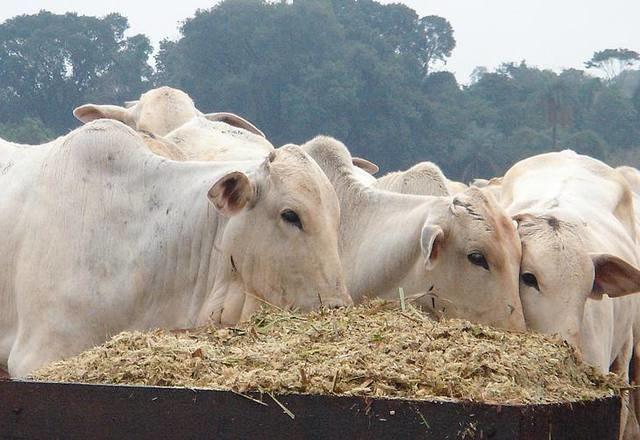 'Preço do boi deve parar de subir em breve', diz analista