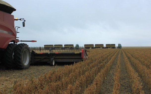 Chuvas compensam atraso no plantio, e safra de soja e milho chega à colheita dentro da normalidade